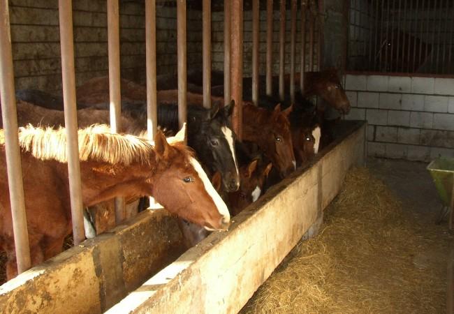 paardenhotel 1.JPG